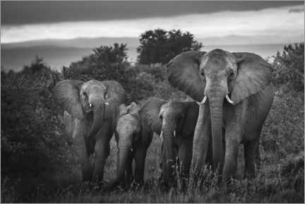 Canvas print  A famille of African elephants - Matthew Williams-Ellis