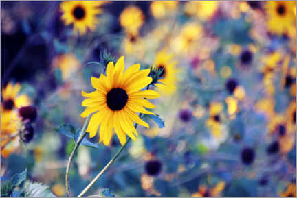 Premium poster Sunflowers in the wind