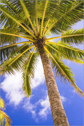 Gallery print  Tropical palm tree under the clear sky - Matthew Williams-Ellis