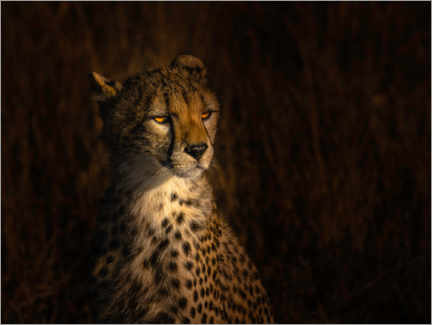 Premium poster  Portrait of a cheetah - Bing Li