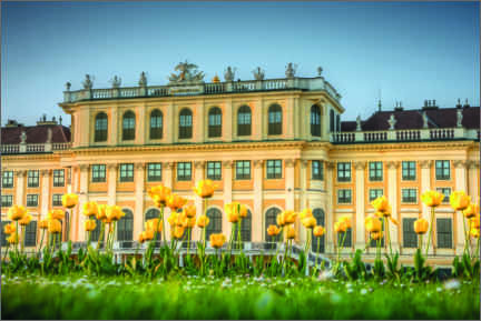 Canvas print  Tulips in front of Schönbrunn Palace - Charlotte Schwarz