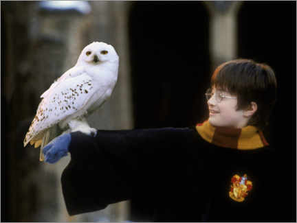Aluminium print  Harry Potter and the Sorcerer's Stone - Harry & Hedwig