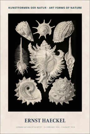 Canvas print  Ernst Haeckel - Art forms of nature II - Museum Art Edition