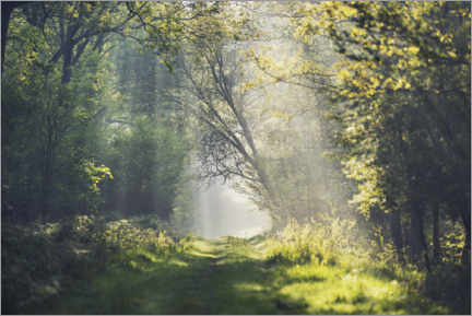 Wall sticker  Fantastic forest path in the morning light - The Wandering Soul