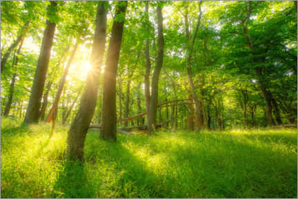 Acrylic print  Spring forest with sun - Oliver Henze