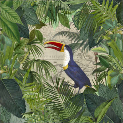 Gallery print  The Toucans Kingdom - Andrea Haase
