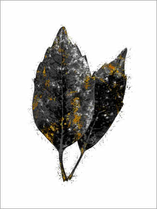 Canvas print  Twin Leaves - SW Clough