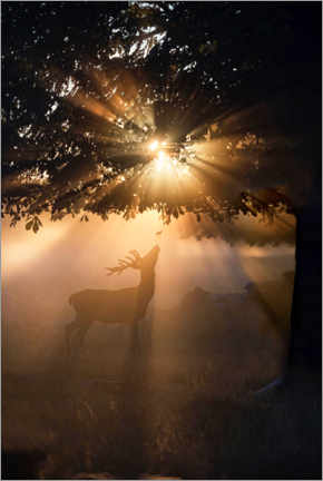 Canvas print  Young deer in the evening light - Max Ellis