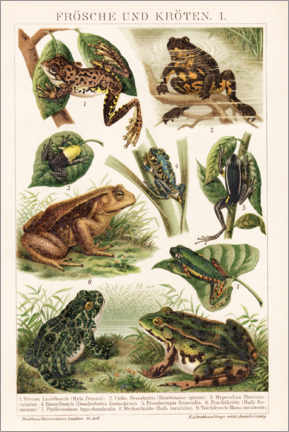 Acrylic print  Frogs and toads