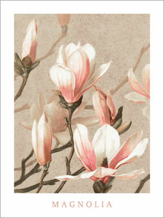 Acrylic print  Magnolia - Wunderkammer Collection