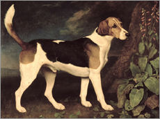 Wall sticker  Ringwood - George Stubbs