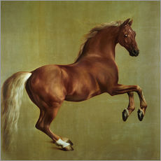 Wall sticker  Whistlejacket - George Stubbs