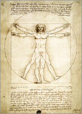 Wall sticker  The Proportions of the human figure - Leonardo da Vinci