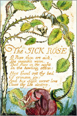 Wall sticker  The Sick Rose - William Blake