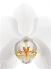 Wall sticker  in the throat of the Orchid - GAVIN KINGCOME