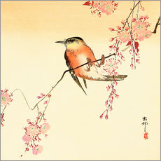 Gallery print  Red bird and cherry blossom - Ohara Koson