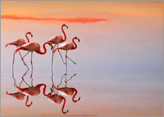 Wall sticker  Flamingos in the mirror - Anna Cseresnjes