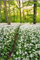 Wall sticker  Wild Garlic Trail - Dave Derbis