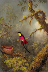 Gallery print  A pair Rotnacken topaz hummingbird - Martin Johnson Heade