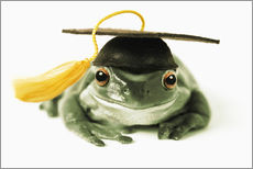 Gallery print  Frog with completion hood - Darwin Wiggett