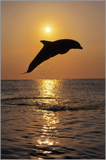 Wall sticker  Dolphin in the sunset - Tom Soucek