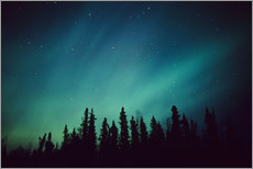 Wall sticker  Northern Lights over a spruce forest - Greg Hensel