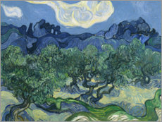 Premium poster  Olive trees with the alpilles in the background - Vincent van Gogh