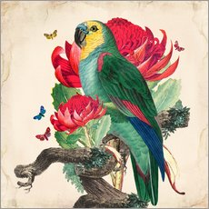 Wall sticker  Oh My Parrot X - Mandy Reinmuth