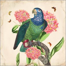 Gallery print  OhMyParrot IV - Mandy Reinmuth
