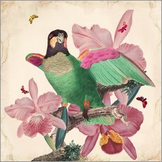 Gallery print  Oh my parrot VIII - Mandy Reinmuth