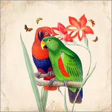 Gallery print  Oh My Parrot I - Mandy Reinmuth