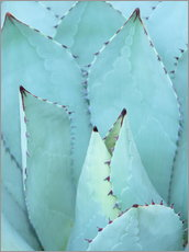 Wall sticker  Agave