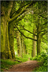 Gallery print  Beautiful spring colors in a forest