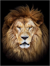 Wall sticker  King of the Jungle Portrait