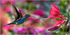 Gallery print  Hummingbird (Archilochus Colubris) with lilies