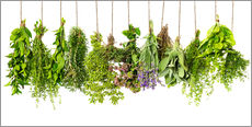 Wall sticker  Hanging herbs