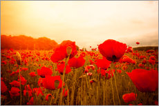 Gallery print  Red Poppies in Spring