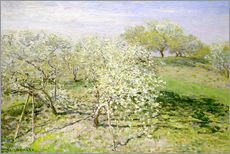 Gallery print  Flowering apple trees in spring - Claude Monet