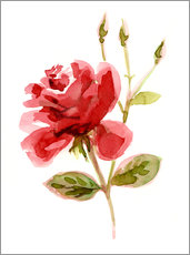 Wall sticker Red Rose