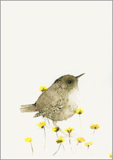 Gallery print  Wren amongst yellow flowers - Dearpumpernickel
