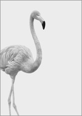 Wall sticker  Black and white flamingo - Finlay and Noa