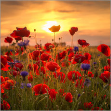 Wall sticker  Poppy field - Steffen Gierok