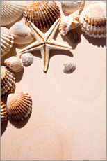 Wall sticker  Starfish and shells