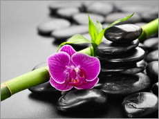 Wall sticker  Basalt stones, bamboo and orchid