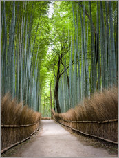 Wall sticker  Bamboo Forest in Kyoto Sagano Arashiyama, Japan - Jan Christopher Becke