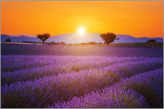 Wall sticker  Sun over lavender