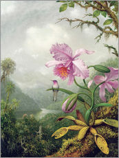 Gallery print  Hummingbird perched on an Orchid Plant - Martin Johnson Heade