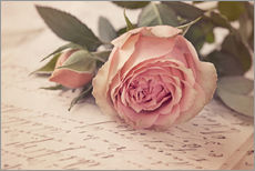 Wall sticker  Rose on the old letter - Elena Schweitzer