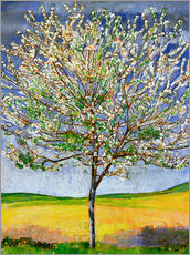 Gallery print  Blossoming cherry tree - Ferdinand Hodler