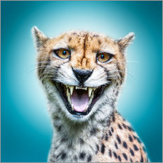 Wall sticker Funny Wild Faces Cheetah